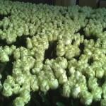 Het maken van huwelijksbloemen… met 1000 rozen